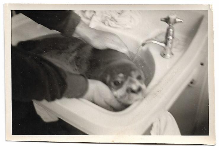 zeehond-carmen-sylva